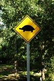 Cuidado para la travesía de la tortuga. Fotos de archivo libres de regalías
