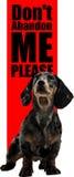 Cuidado para los animales domésticos perdidos Fotografía de archivo