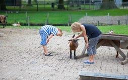 Cuidado para os animais foto de stock royalty free