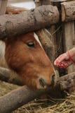 Cuidado para um animal Fotografia de Stock Royalty Free
