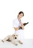 Cuidado que toma veterinario de un perro Fotos de archivo libres de regalías