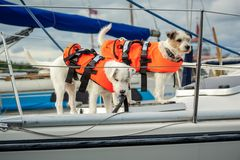 Cuidado sobre animales domésticos La seguridad es primera Fotografía de archivo libre de regalías