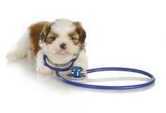 Cuidado veterinário Fotografia de Stock