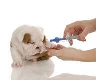 Cuidado veterinario Imagen de archivo libre de regalías