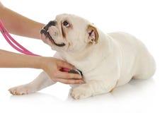 Cuidado veterinario Imágenes de archivo libres de regalías
