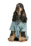 Cuidado veterinario Foto de archivo