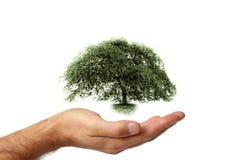 Cuidado y protección del ambiente Foto de archivo libre de regalías