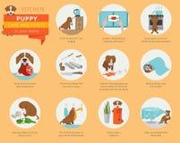 Cuidado y seguridad del perrito en su hogar Cocina Entrenamiento del perro casero adentro stock de ilustración