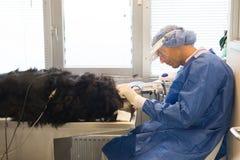 Cuidados dentários para animais de estimação fotografia de stock
