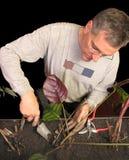 Cuidados do homem para plantas internas Fotografia de Stock
