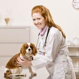 Cuidados fêmeas do veterinário para o cão Fotos de Stock Royalty Free