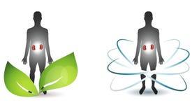Cuidados médicos humanos dos rins Imagem de Stock