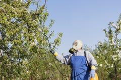 Cuidando para los árboles frutales, cultivando un huerto El jardinero asperja árboles foto de archivo