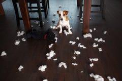 Cuidar perros en exceso fotografía de archivo