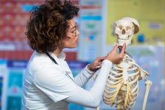 Cuide la anatomía de enseñanza de la mujer usando modelo esquelético humano imagen de archivo libre de regalías