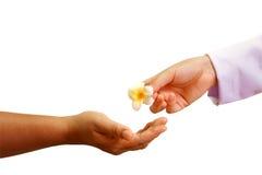Cuide la mano que da una flor a la mano del paciente foto de archivo