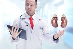 Cuide sostener los órganos humanos y la tableta en un hospital De alta resolución Imagen de archivo libre de regalías