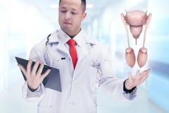 Cuide sostener los órganos humanos y la tableta en un hospital De alta resolución Foto de archivo