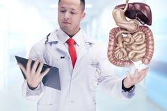 Cuide sostener los órganos humanos y la tableta en un hospital De alta resolución Fotos de archivo