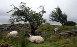 Cuilcagh-Berge, Cavan Stockfotografie