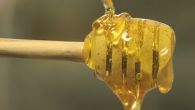 Cuillère épaisse organique saine de Honey Dipping From The Wooden banque de vidéos