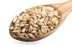 Cuillère de grain écrit organique cru Images libres de droits