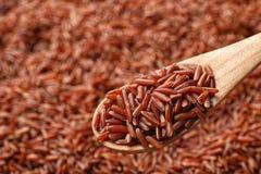 Cuillère en bois avec du riz brun cru au-dessus de la céréale photographie stock libre de droits
