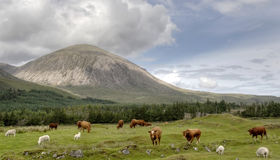 Cuillin Isle of Skye Stock Images