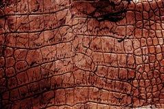 cuir texturisé Photo libre de droits