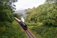 Cuisez le train à la vapeur avec la plume de la fumée, voyageant par une vallée boisée Image libre de droits