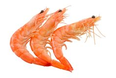 Cooked Prawns or Tiger Shrimps on White Background Royalty Free Stock Images
