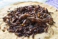 Cuisine rôtie de sauterelle d'Oaxaca Photo stock