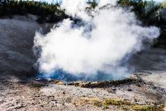 Cuisson à la vapeur de la piscine géothermique au parc national de Yellowstone photographie stock libre de droits