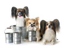 Cuisson de petits chiens Image libre de droits