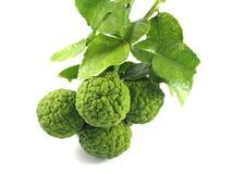Cuisson de vert de bergamote Photo stock