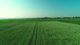 Cuisson de vue aérienne Basse vue au-dessus d'un paysage vert avec la longue herbe 4K banque de vidéos