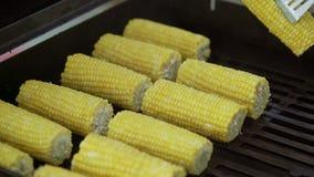 Cuisson du maïs sur le gril banque de vidéos