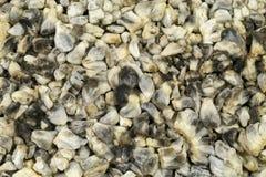 Cuitlacoche Hoogste Mening Stock Afbeelding