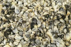 Cuitlacoche Top View Stock Image