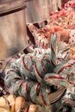 Cukierek trzcina Zdjęcie Royalty Free