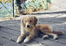 Cukierki i innocwnt pies zdjęcia royalty free
