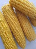cukierki kukurydzanego przemysłu przerobowy cukierki zdjęcia stock