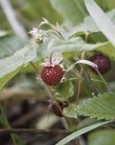 Cukierki od nasz planety ziemi ogrodowa przyjemność obraz royalty free