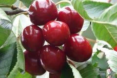 cukierki wiśniowe Zdjęcia Stock