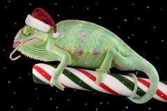 cukierku trzciny kameleon Obraz Royalty Free
