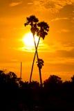 Cukrowa palma w zmierzchu Zdjęcia Royalty Free