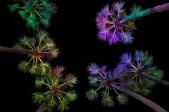 Cukrowe palmy Zdjęcia Royalty Free