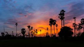 Cukrowy drzewko palmowe jako sylwetka w niebo zmierzchu zmierzchu czasie Zdjęcie Royalty Free