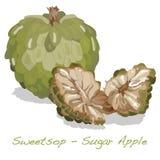 Cukrowy Jabłczany wektor royalty ilustracja