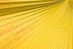Cukrowy palmowego liścia tło Obraz Royalty Free